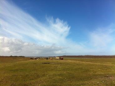 Paarden en runderen